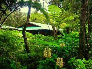 Volcano Anthurium Alii Gardens