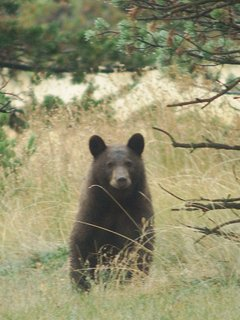 And Boo Boo, our neighborhood bear. SERIOUSLY! Do not feed or approach wildlife! They'll hurt you!