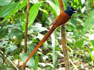 Kanattewatte : Discover Sri Lanka's Garden Side., Ambalangoda