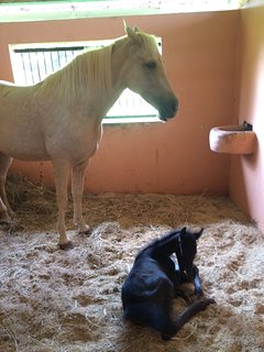 A mare and her colt at the stables at the resort