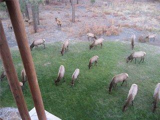 Cool Pines Lodge ~ RA131744, Pagosa Springs