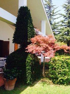 La composizione di piante all'ingresso della villa