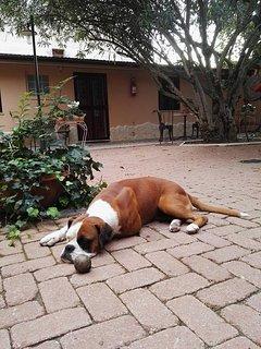 rest time  Cubit our dog