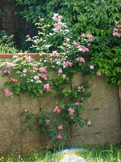 L'angolo delle rose del giardino