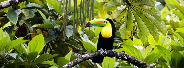 Toucans, sloths, monkeys, butterflies, tree frogs, and other exotic animals right at your doorstep.