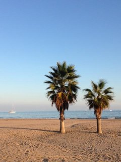 Palms at Torredembarra beach