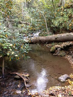 Large Creek in Forest