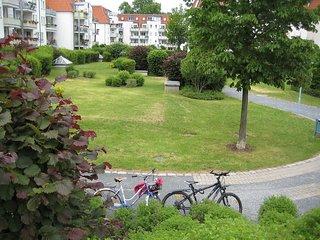 Kamelienweg #5614.1, Dresde