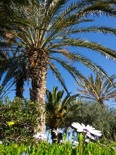 Old palm trees in the garden