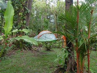 Tienda de campaña colgante en jungla (c - Cocles