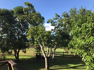 Mango Grove 2+1 on 90 acres: Pond Swimming, Hiking, Coconuts, Monkeys, Papayas