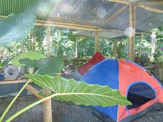 Tienda de campaña  bajo cubierta (a  - Cocles
