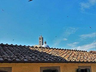 Contrada dell'Oca #7465.1, Siena