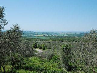 Cortinova #9935.3, Monte San Savino