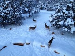 See deer, wild turkey and bobcats.