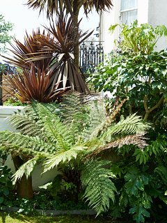 A bit of exotic foliage - palm trees in the centre of brighton !