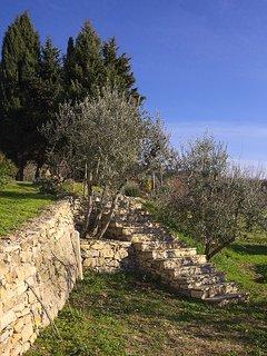 Garden around property