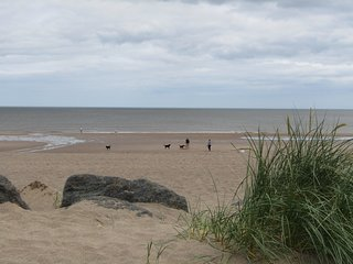 Miles of beautiful clean   golden sandy and dog friendly beaches. You can often have it to yourself.