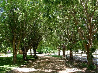 Tree lined drive entry to Ibizan Wines