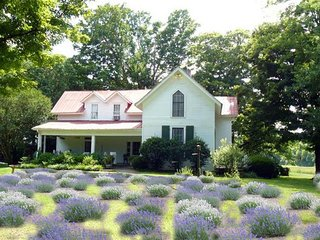 Mulberry Lavender Farm and Bed & Breakfast near Lynchburg, TN