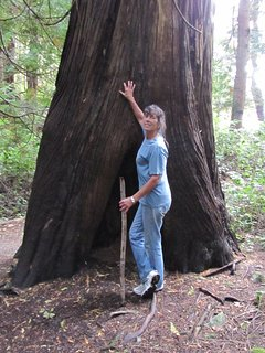 Old growth tree in Francis Peninsula Marine Park - only a 25 min. walk or 1.5 min by car