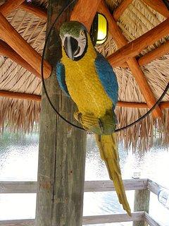 Tiki hut mascot