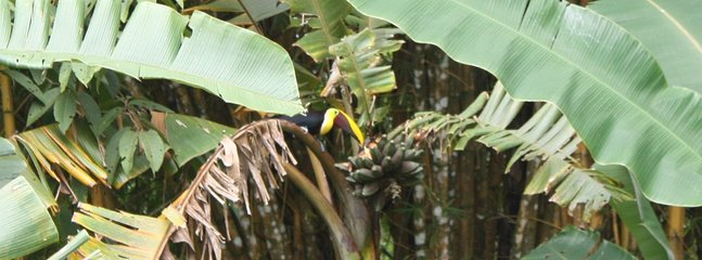 Look close , you will see a regular visitor , the Toucan.