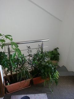 stairs entrance