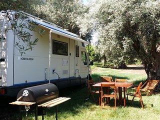 Autocaravan in olive tree grove