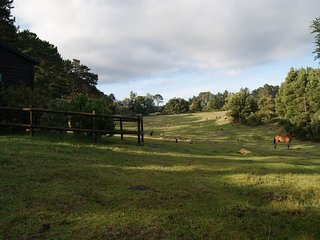 Cosy cabin | fireplace | free-roaming horses | forest walks | mid garden route