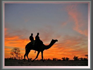 Sunrise desert adventure camp