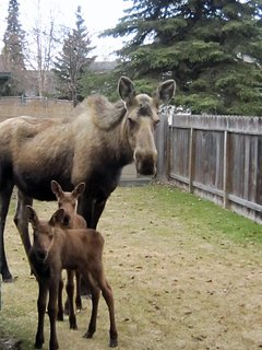 """We also saw two moose down the street. It was a real alaskan experience,"" wrote guest Kelly."
