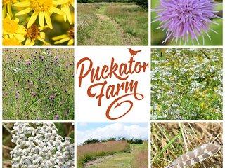 Puckator Barn End
