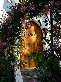 Honeysuckle and jasmine at la Casita gate.