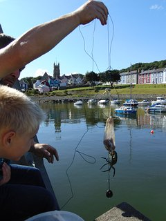 Crab fishing in the harbour at the beautiful Georgian town of Aberaeron, only 4 miles away.