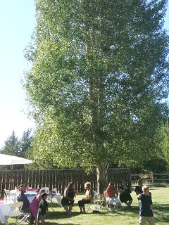 Wedding reception, catered, under shady pines and aspens.