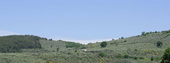 View of the house amongst the olive groves