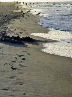 Beautiful stroll along the gulf.