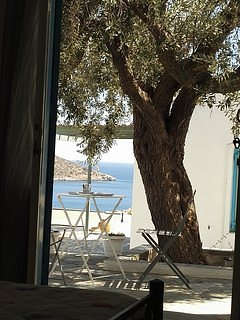 A l'ombre de l'olivier centenaire...