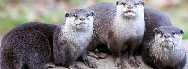 The Otter and Butterfly Sanctuary is a couple of minutes drive away