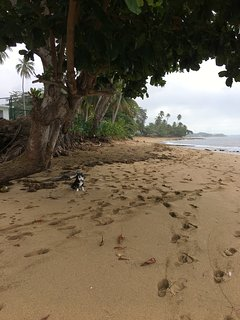 Enjoy a 2 mile walk north along the beach towards Tres Palmas Marine Reserve with you best friend!
