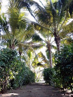 Your shady palm tree-lined path to the beach, just 150 feet (50 meters) from the beach!!