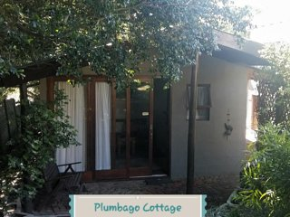 Plumbago Cottage Self Catering upmarket garden cottage