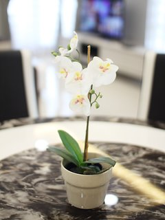 Orchid on the Dining Table