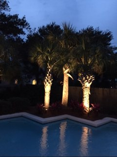 Pool palms with up lights