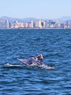 Whale watching season November through March