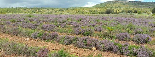 Un de nos champs de plantes