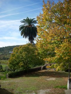 Autumn colours at the Quinta