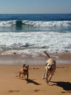 Dog friendly beach with off-leash times
