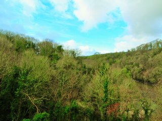 A stunning 5 bed house nestled in the treetops situated in a magical setting, Fowey